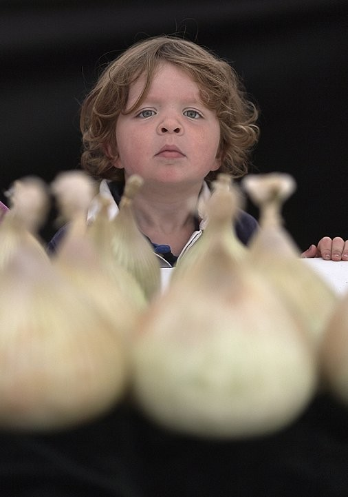 Young boy staring at a selection of large onions.